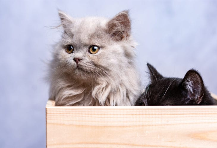 Worlds 10 Cutest Cat Breeds 10 Most Today