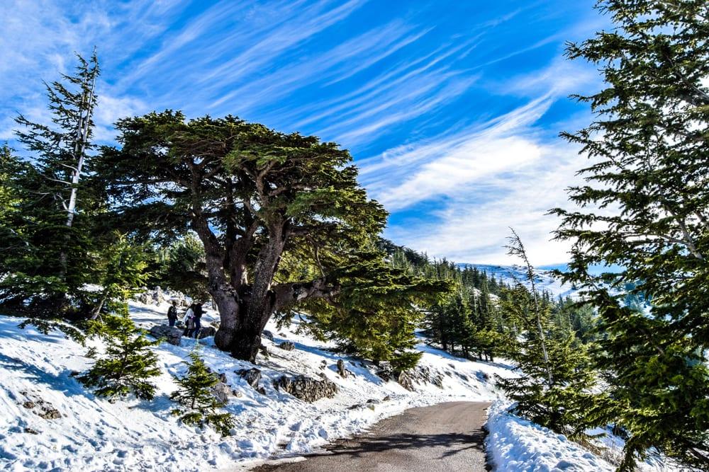 Most Popular Trees