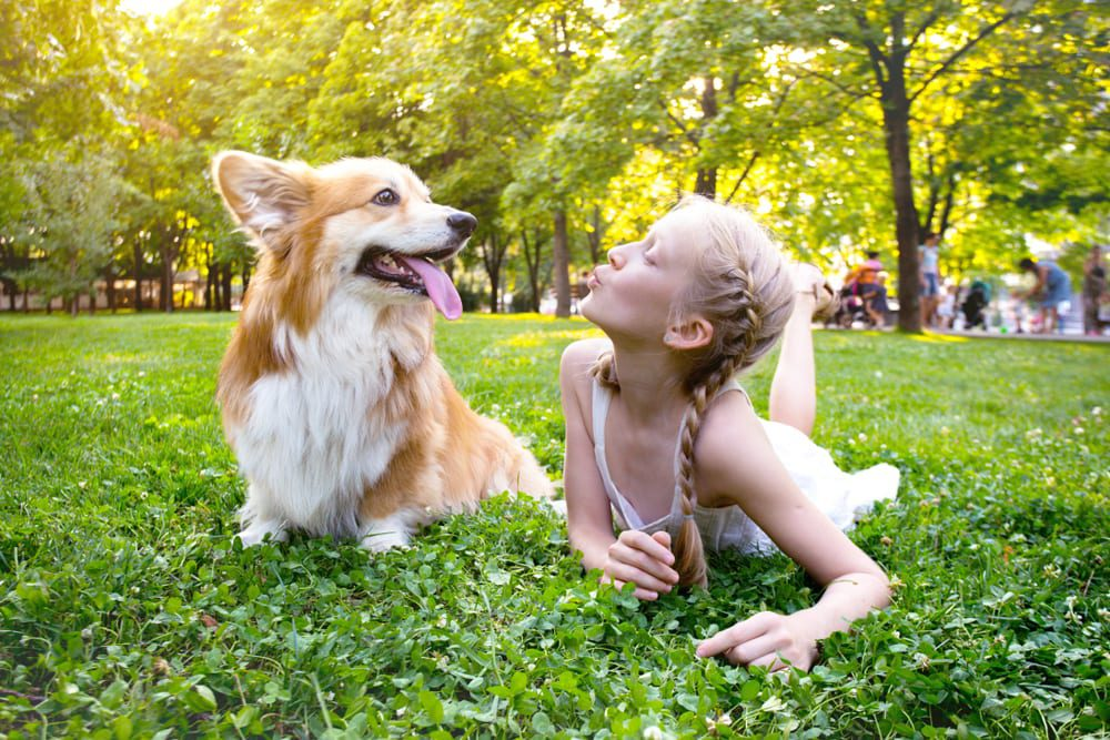 Most Playful Dog Breeds - corgi