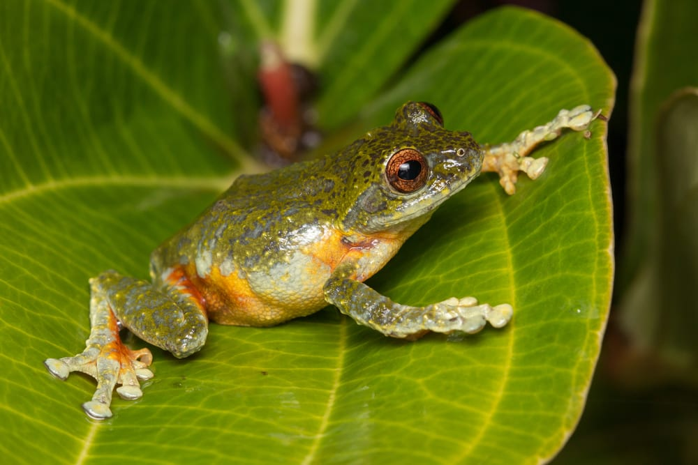 Animals that can live without food - frogs