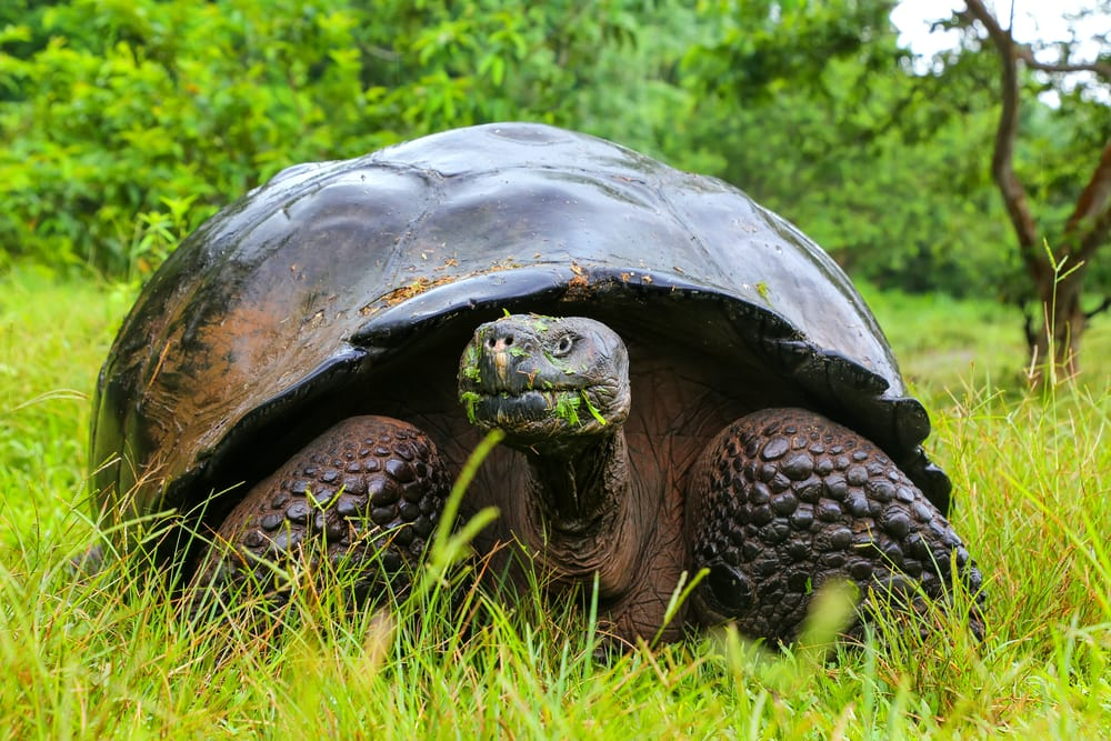 Animals that can live without food - galapagos tortoise