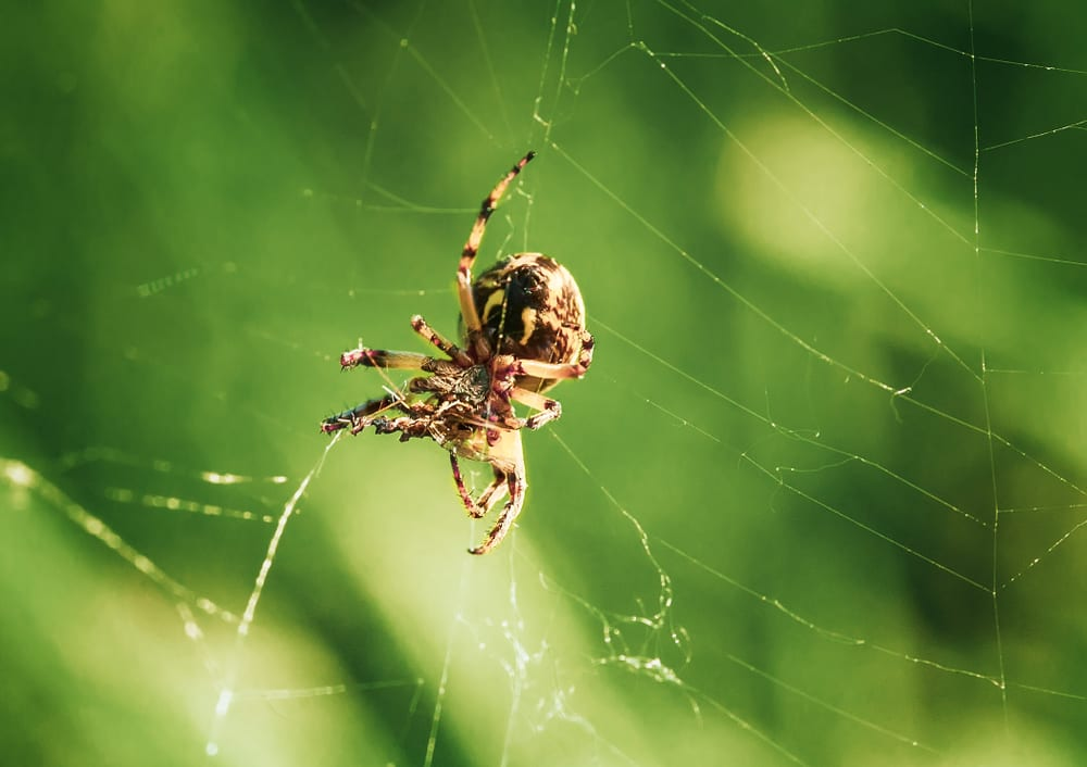 Animals that can live without food - spiders