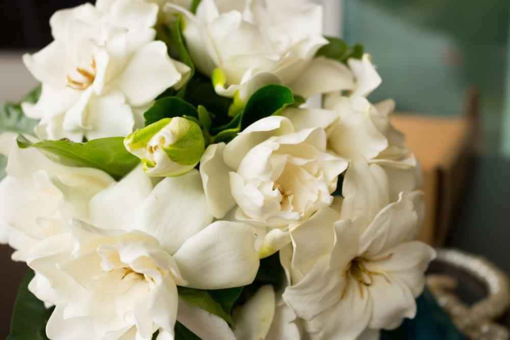 Most Popular Wedding Flowers - Gardenia