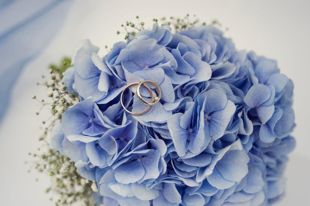Most Popular Wedding Flowers - Hydrangea
