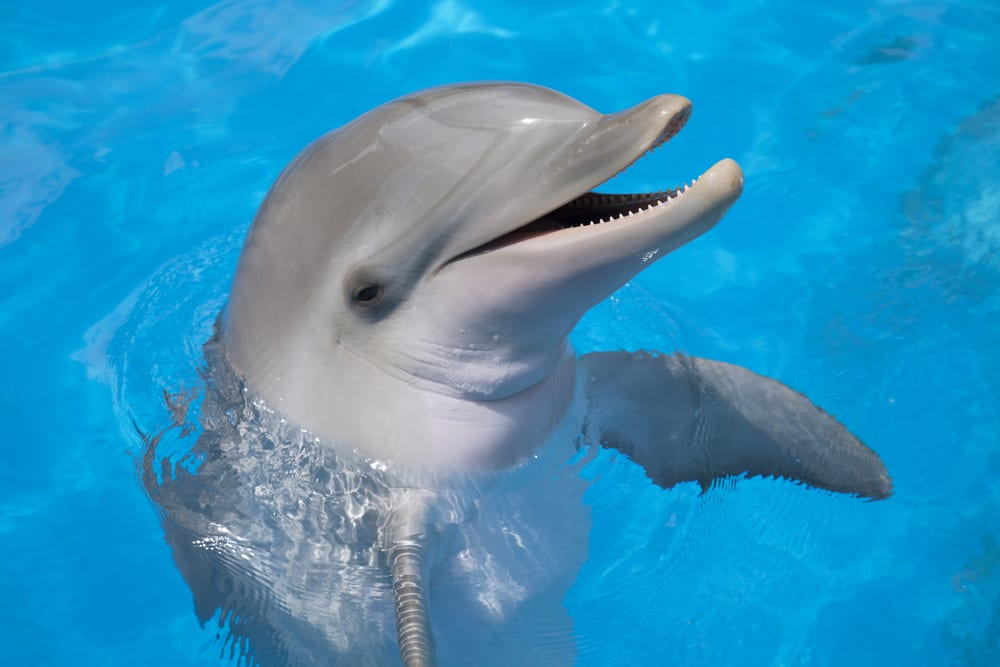 Most extreme hearing animals - Dolphin