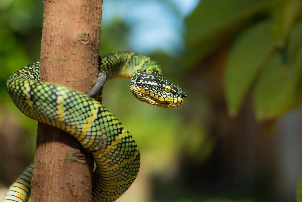 Most Venomous Snakes - Viper