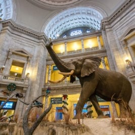 Most Visited Museums - National Museum of Natural History