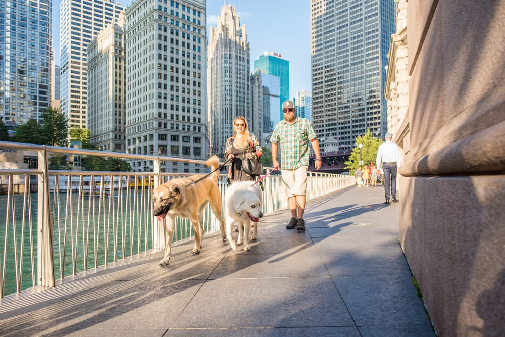 Most Pet Friendly Cities - Chicago IL