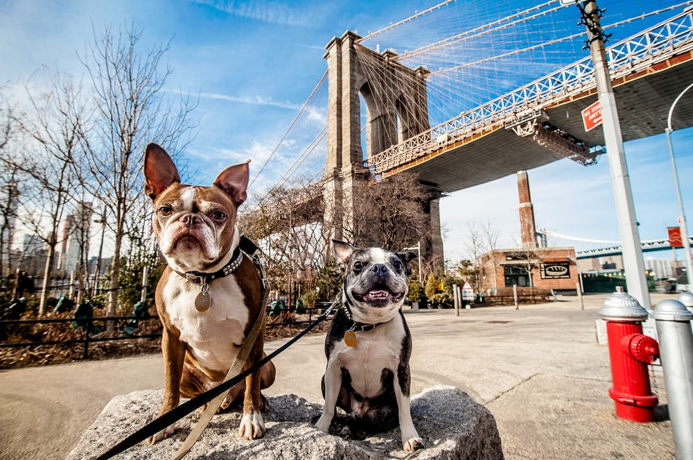 Most Pet Friendly Cities - New York NY