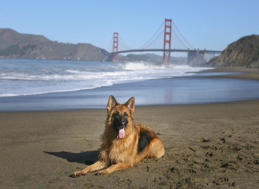 Most Pet Friendly Cities - San Francisco CA.