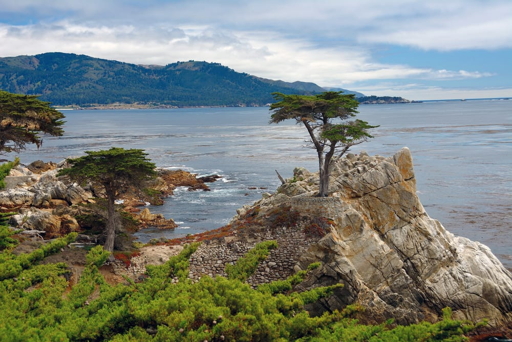 Most Famous Trees in the World: Lone Cypress