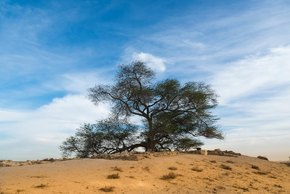 Most Famous Trees in the World: Tree of Life