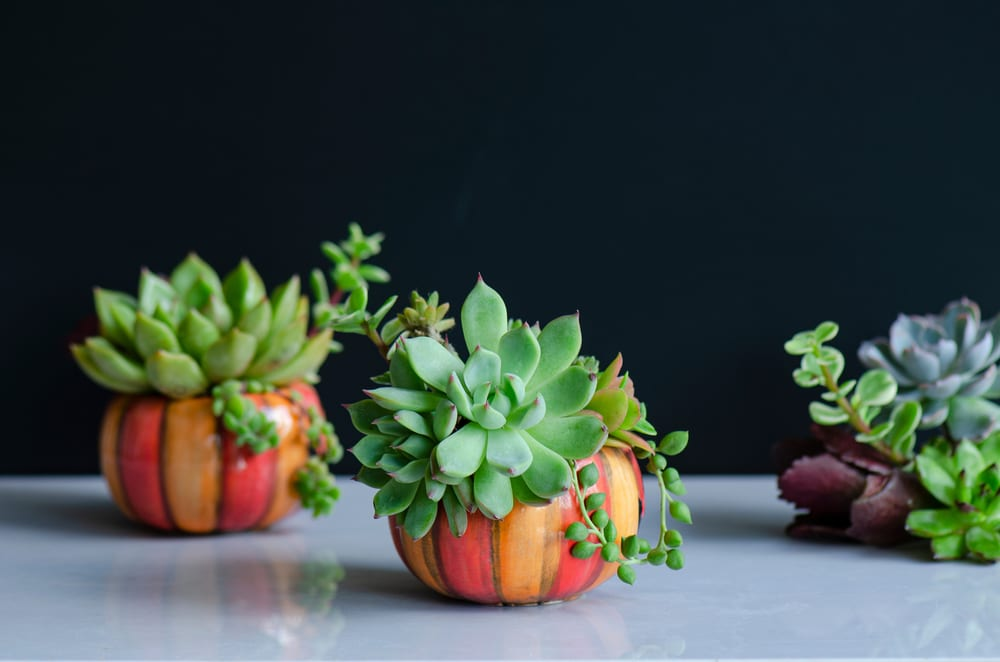 Most Creative Uses for Your Pumpkins - Create a Pumpkin Pot