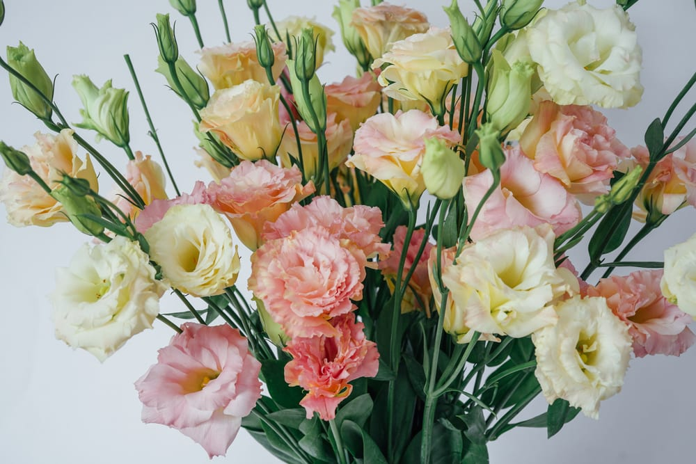 Most Expensive Plants - Lisianthus