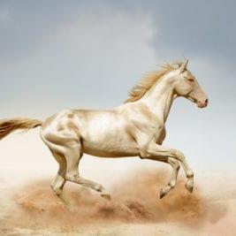 Most Beautiful Horse Breeds - Akhal-Teke
