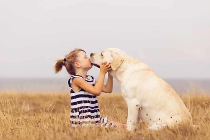 Cheapest Dogs - Labrador Retriever