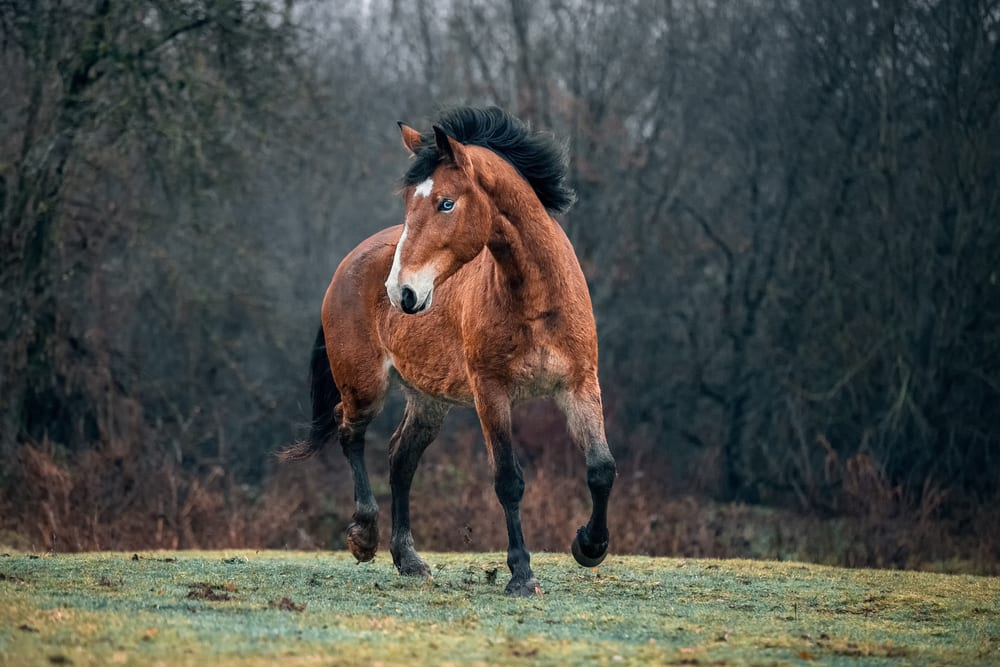 Most Beautiful Horse Breeds - Mustang
