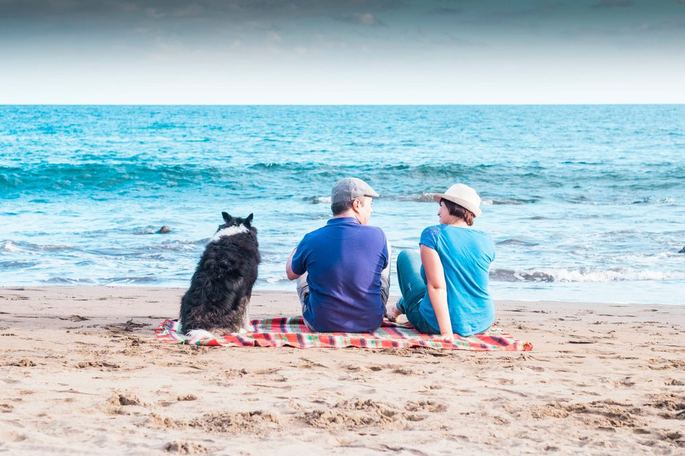 Most Dog-Friendly Places - Tampa Florida