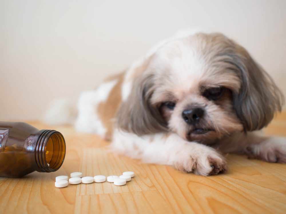 stop feeding your dog these 10 items - human medicine